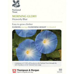Morning Glory 'Heavenly Blue' (National Trust)