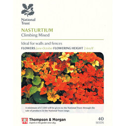 Nasturtium 'Climbing Mixed' (National Trust)