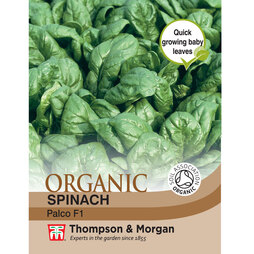 Spinach 'Palco' F1 Hybrid - Organic Seeds