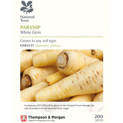 Parsnip 'White Gem' (National Trust)