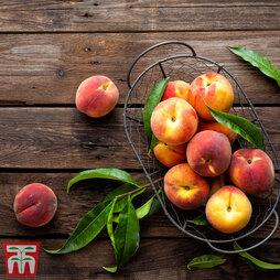 Peach Mini Standard (Dwarf)