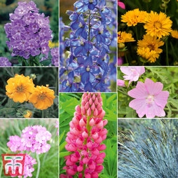 Perennial Summer Garden Collection