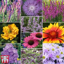 Nurserymans Choice Perennial Cottage Garden Collection