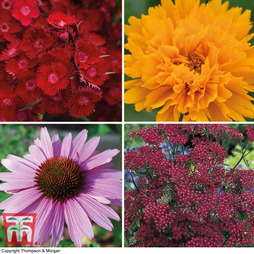 Super Summer Perennial collection