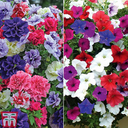 Perfect Petunia Collection