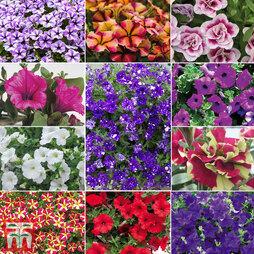 Nurserymans Choice Petunia Collection