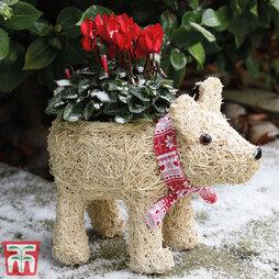 Festive Polarbear Brushwood Pot & Cyclamen
