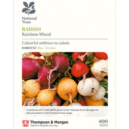 Radish 'Rainbow Mixed' (National Trust)
