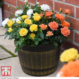 Rose Mini Patio Collection