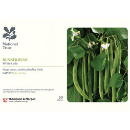 Runner Bean 'White Lady' (National Trust)