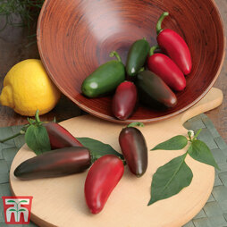 Chilli Pepper 'Samira Shiny'
