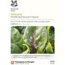 Spinach PV1390 'Red Veined' (National Trust)