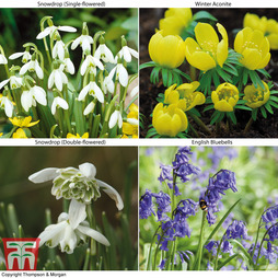 Spring Bulbs In The Green Collection