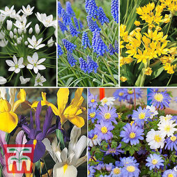 100 Spring Flowering Bulb Collection