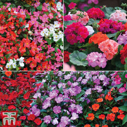 Summer Bedding Saver Pack
