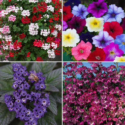 Nurseryman's Choice Summer Container Mix