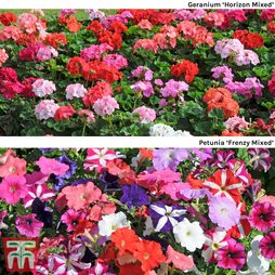 Summer Bedding Plant Collection