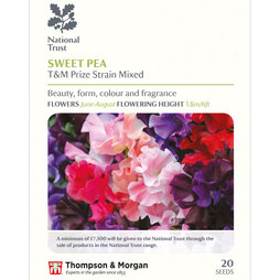 Sweet Pea 'T&M Prize Strain Mixed' (National Trust)