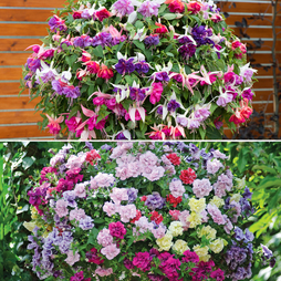 FREE* Hanging Basket Collection