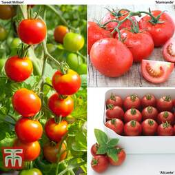 Tomato Grow Bag Collection