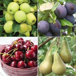 Favourite Fruit Tree Collection 4 Trees