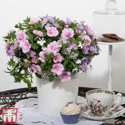 Trixi® 'Romance 20'