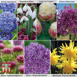 Ultimate Spring Bulb Collection
