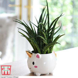 Unicorn Pot with Sanseviera 'Fernwood' Plant (House Plant)
