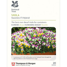 Viola x williamsiana 'Sweeties' (National Trust)