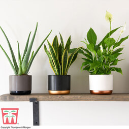 Wellbeing Collection (House Plant)