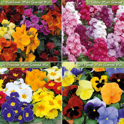 Most Scented Winter Bedding