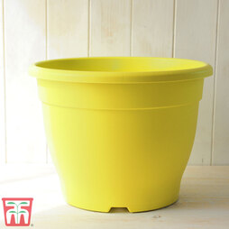 Bella Yellow Pot