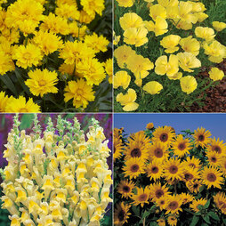 Mellow Yellow Flower Collection