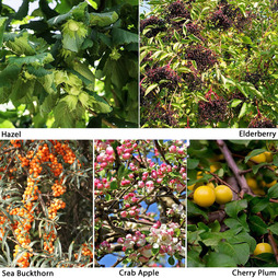 Edible Hedging Collection