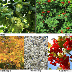 Autumn Shades Hedging Collection