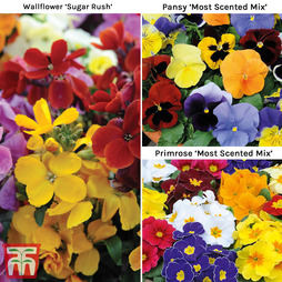 Winter Most Fragrant Collection