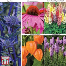 Everlasting Perennial Collection 20 Plants